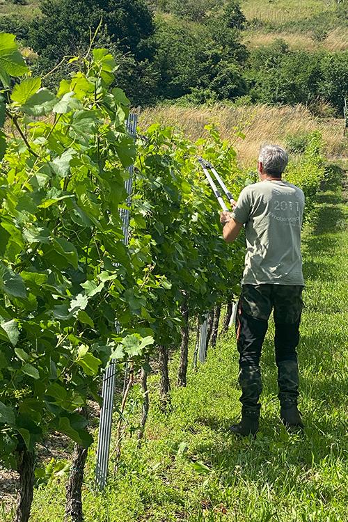 Arbeit auf dem Weinberg